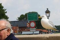7 Diese Seemöwe mag den Kopf/A seagull like this head