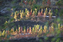 128 Weingebirge im Herbst/Mountains with vine in autumn