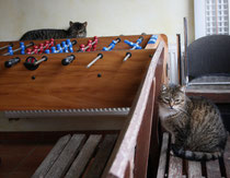 10 Katzen/Cats