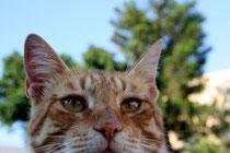44 Kater/Tomcat
