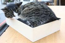 24 Katze in einer Kiste/Cat in a box