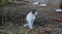 89 Katze auf einer Wiese/Cat on a meadow