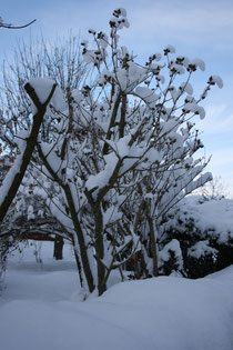 29 Baum im Schnee/Tree in the snow