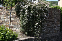 99 Mauer mit  Blumen/Wall with Flowers