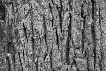 11 Baumrinde/Bark