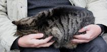 16 Katze/Cat