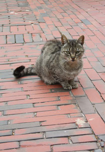 66 Eine Hauskatze in Greetsiel/A cat in Greetsiel