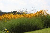 21 Blumenfeld/Flowers