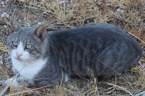 77 Kater/Tomcat