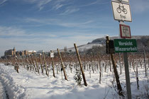 20 Weinfelder im Schnee/Fields with vine in snow