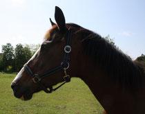 10 Pferd auf der weide/Horse on a meadow