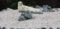 164 Seehunde/Seals