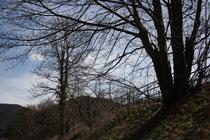 65 Landschaft/Landscape
