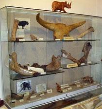 Relikte eiszeitlicher Tiere