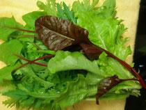 サラダ野菜セット