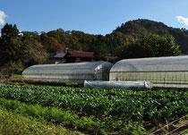 西田農園のハウス
