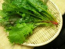 有機彩り野菜