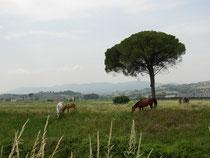 In der Valle Umbra