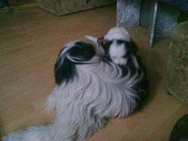 Helena turnt auf Tante Fayala-Daffy