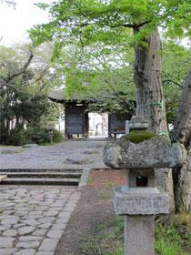 新緑の仙台陸奥国分寺 【薬師堂】