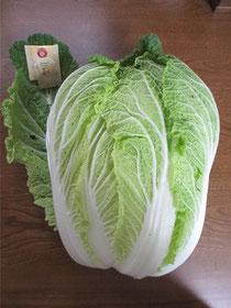 全長35㎝*幅25㎝巨大白菜びっくり(◎o◎)!