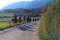 15 Pferde am Putzenberg