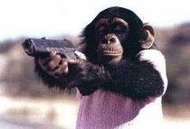 Affen sind treffsicherer als Analysten.