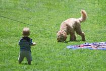 犬がいる家庭で育った赤ちゃんはアレルギーリスクが減少
