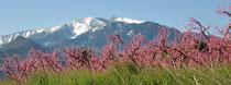 Montagne du Canigou