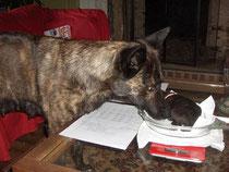 wegen van pups gaat onder begeleiding van mam
