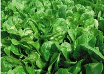 Филохинон (Витамин К) Вырабатывается только в зеленых частях растений