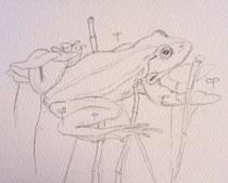 grenouille verte crayon