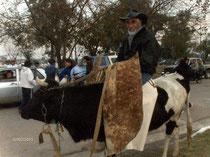 Bernardo sur Lola - Selle avec guardamonte
