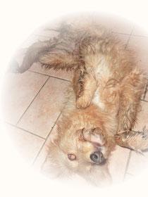 Schmutz mit Kasperhund dran