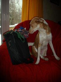 Diego auf gepackten Koffern