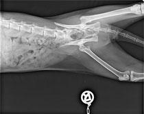 Röntgenbild: Becken