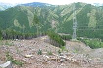 ナラやヤマザクラをはじめとした木々の植樹活動を行いました。