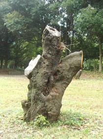 切られた木
