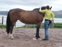 Sobald das Pferd in die gewünschte Biegung nachgibt, CLICK!, tritt die Person in den freigemachten Raum und belohnt.