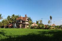 Grünes Reisfeld in Bali