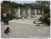 Tierschutz, Izmir, Foca, Türkei, Nilgün Karsilayan, Izmir / Türkei /  Foça - Tierheim, iDO-World