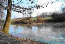 Feuchtbiotop für Amphibien in Vaihingen