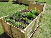 Frisch bepflanzt (Foto: Regina Behme)
