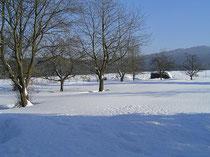 Lindenhof-Garten im Winter