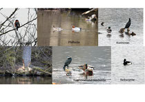 Auszug der gesehenen Vögel Fotos; K-H Kuhn