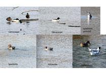 Auszug der gesehenen Vögel. Fotos: K-H Kuhn