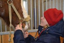 Praktische Übungen am Pferd