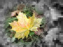gelbes Herbstblatt auf Wiese
