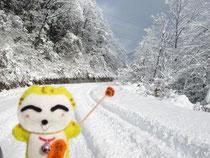 雪けっこう降ってます(*^。^*)
