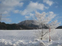 霧氷と沖ノ郷山